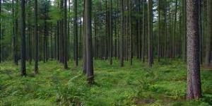 Forest Images | World Forest Day | World Forestry Day | World Forestry Day 2014