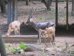 Vandalur Zoo Images, Arignar Anna Zoological Park Pictures, Arignar Anna Zoological Park Images, Images of Arignar Anna Zoological Park
